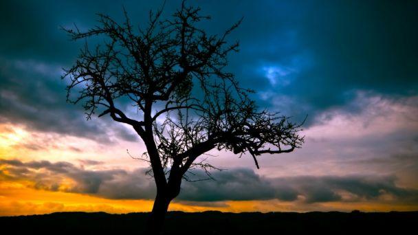 Výrub stromov